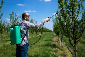 male-agronomist-treating-apple-trees-with-pesticides-orchard)